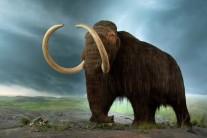 Cientista aplica DNA de Mamute em elefante. Teremos o 'parque'?!