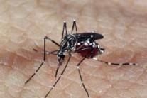 Com 2 mil 400 casos, Brasília redobra os cuidados contra dengue