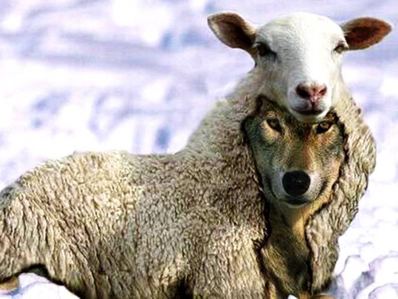 """Résultat de recherche d'images pour """"dessins du jour humour un loup déguisé en mouton"""""""