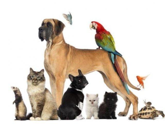 Está faltando atenção aos animais de estimação | Notibras